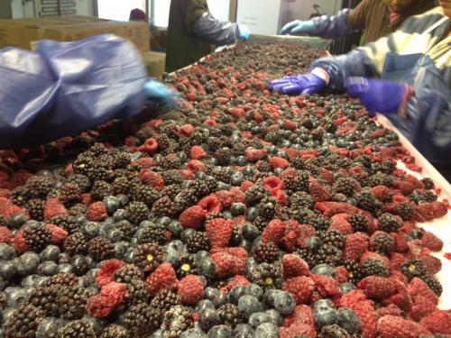 Making frozen mixed berries